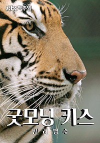JTBC 팩추얼 – 굿모닝 키스